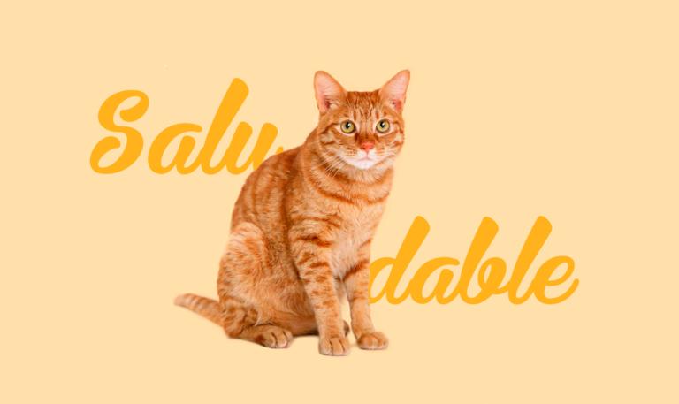 gato1-1