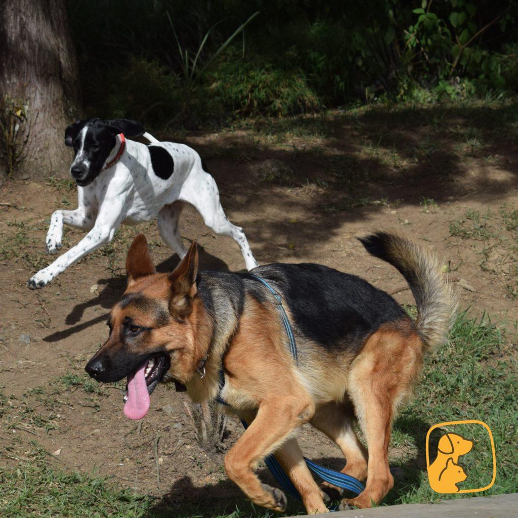 gatos y perros también hacen ejercicio