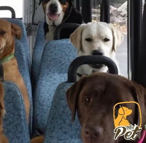 Perros y transp publico 3logo