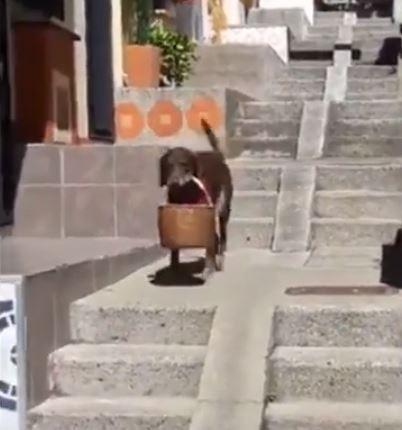 Perro Trabajador